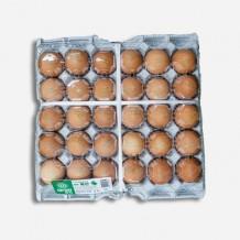 계란 특란 1판