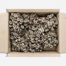 애느타리버섯 (2kg/국내산)