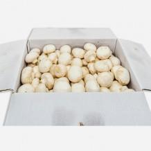 양송이버섯 특 (2Kg/국내산)